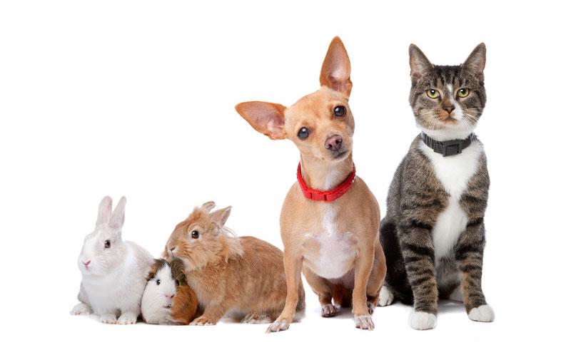 Pet Allergies | Allergies and Health